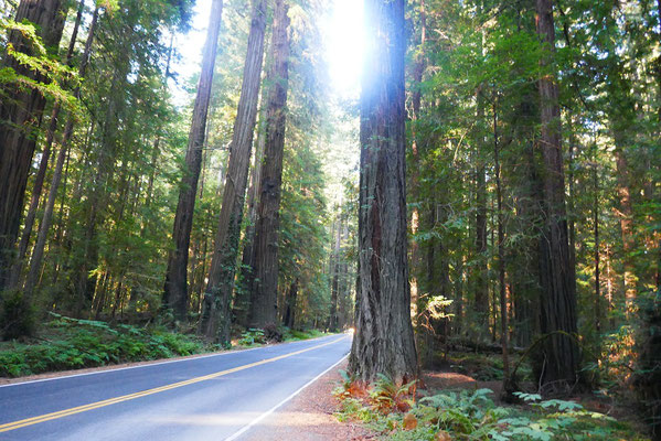 Die Avenue of the Giants