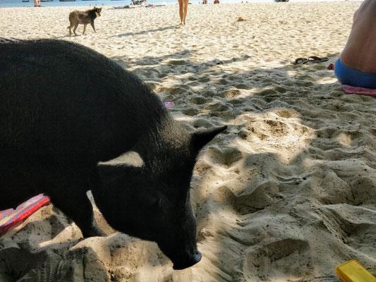 unerwarteter Besuch am Strand :)