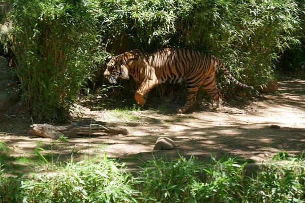 Washington DC - Zoo