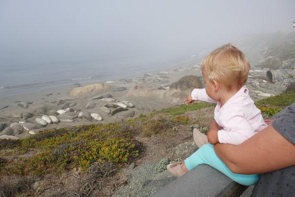 Seeelefanten am Point Piedras Blancas