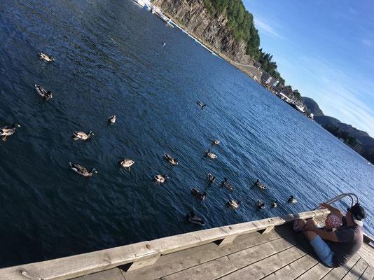 Enten füttern in Flekkefjord