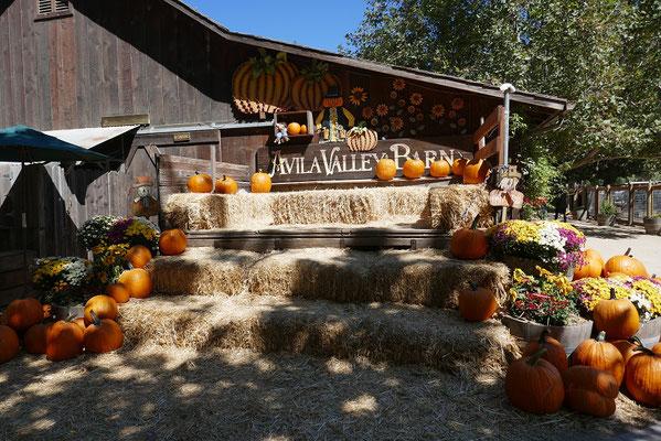 Avila Valley Barn - langsam wurde es Herbst