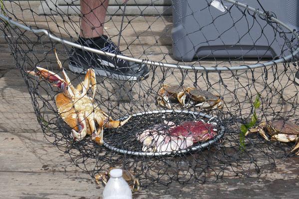 auch die Krabbenfänger waren erfolgreich