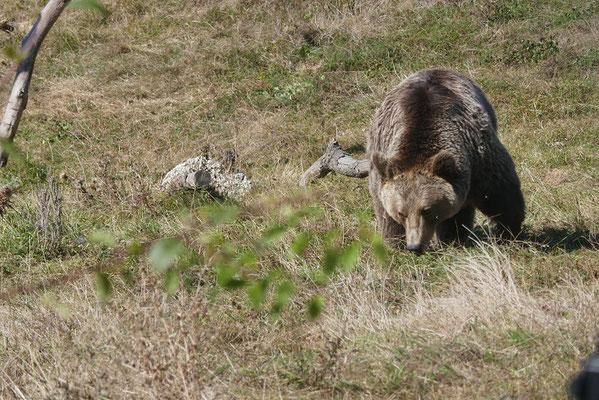 Bear Sanctuary von 4Pfoten