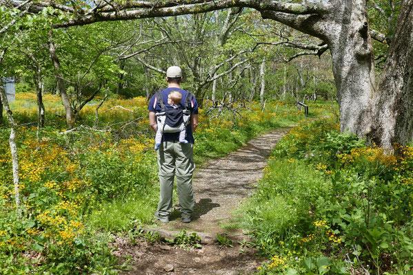 Shenandoah Nationalpark