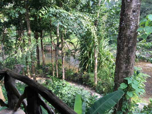 Khao Sok Nationalpark - Blick von unserer Terrasse
