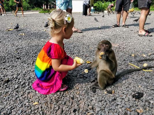 Affen füttern im Tempel Wat Suwan Kuha