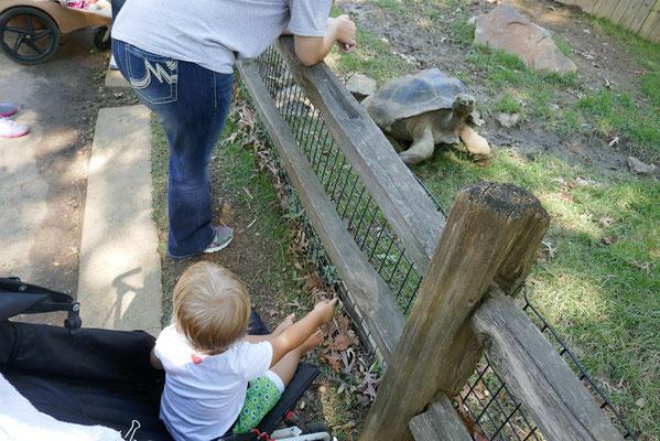 Zoo Memphis