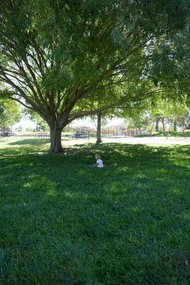 Stadtpark Albuquerque