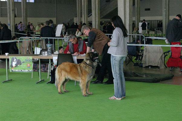 """IHA Lausanne 2007 Jugendklasse """"V1"""" CAC Jugendsieger"""