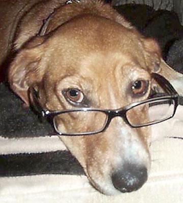 Urlaub Buch Hund Kind