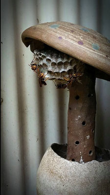 I don't hate these guys, they work hard to keep my garden safe from harmful pests.