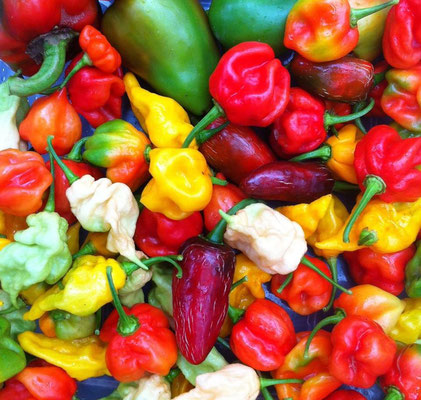 A beautiful mix of freshly picked peppers from my garden.  Some of these are extremely spicy!