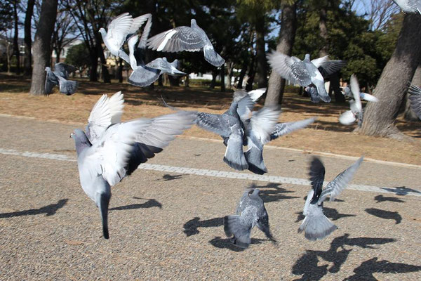 Pigeons and bread crumbs: cheap entertainment!