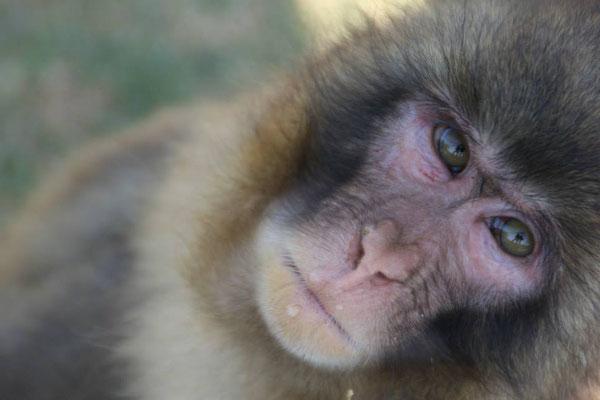 A serious monkey!