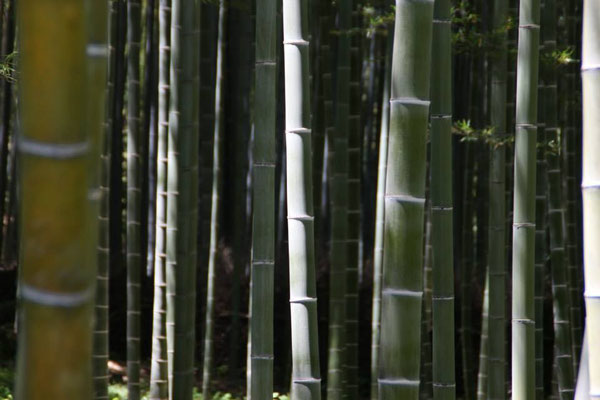 I love to see giant bamboo forests in Japan.  They seem surreal to me, because of their uniformity.