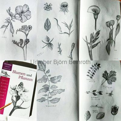 Blumen und Pflanzen Studien im Skizzenbuch