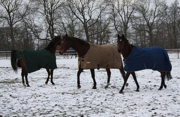 Pferde-Logbuch & Leitfaden zur Gesunderhaltung des Pferdes
