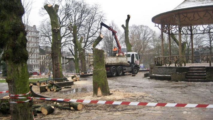 Abattage d'arbres dans la région de Bruxelles par BLS