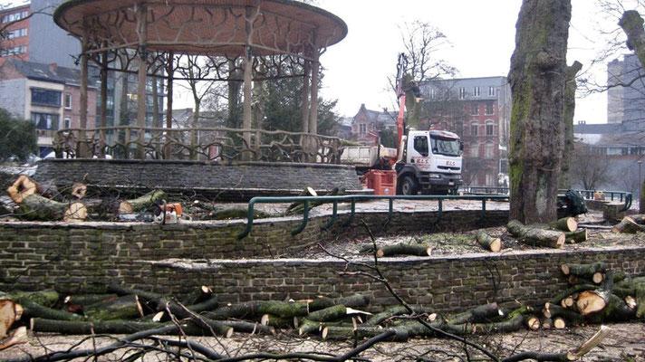 Travaux d'abattage à Bruxelles