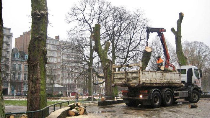Elagage et abattage avec évacuation des déchets