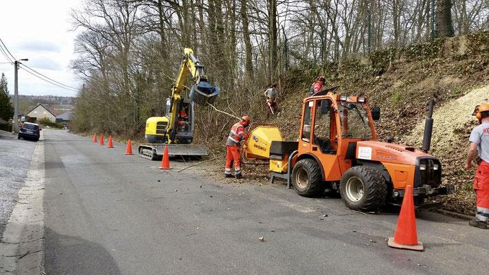 Abattage d'arbres dangereux à Charleroi