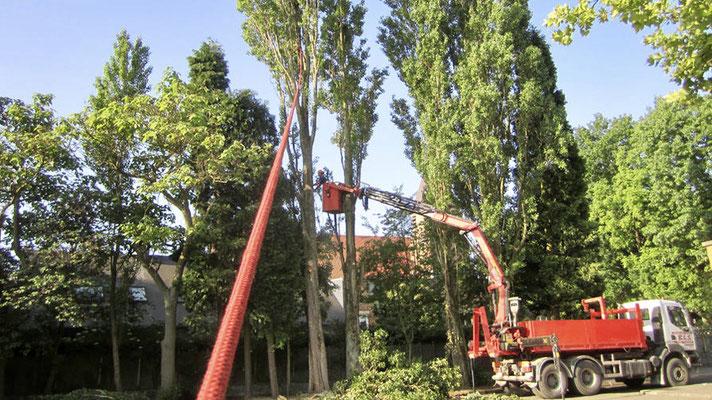 Abattage dangereux par BLS jardin