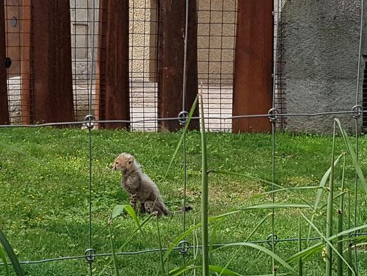 Nachwuchs im Zoo Basel