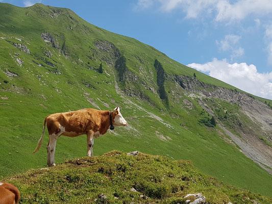 Die Königin der Alpen, oder so :-)