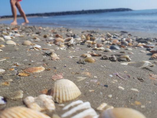 Muschelstrand in Cape d'Agde