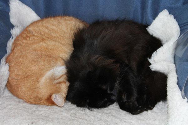 Garfield und Leila
