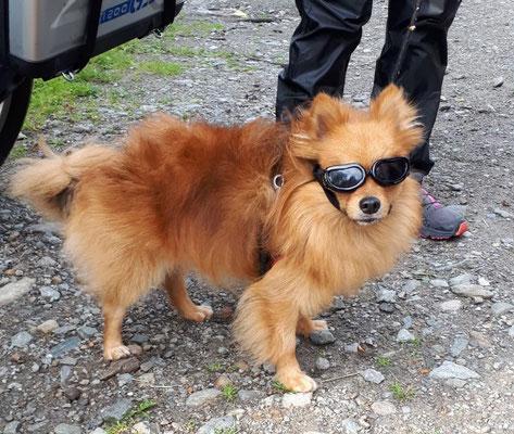 Motorradhund aus Italien