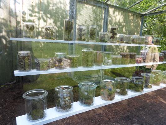 Garten im Glas - Günter Kühn