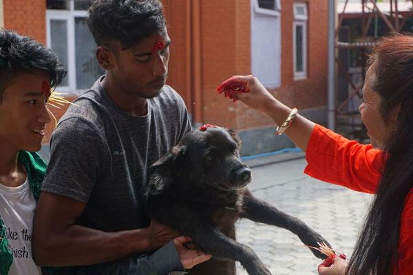 Auch Haushündin Kali bekommt zur feier des Tages ein Tika.