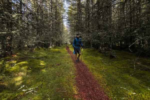Mystical Forest (East Highland Way)