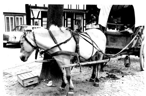 1. Historischer Markt. Landwirt Ernst Massmann aus Hüsede als erprobter Marktfahrer mit seinem Planwagen mit Gemüse
