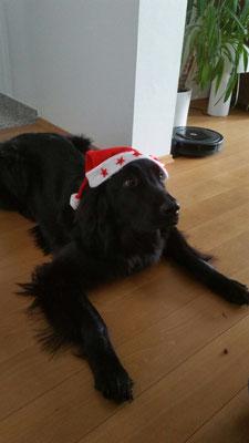 Artos ist auch in Weihnachtsstimmung