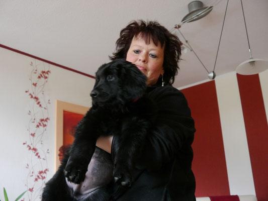 Aron (das Powerpaket) lebt nun mit einem Hundekumpel Sam in Krefeld.