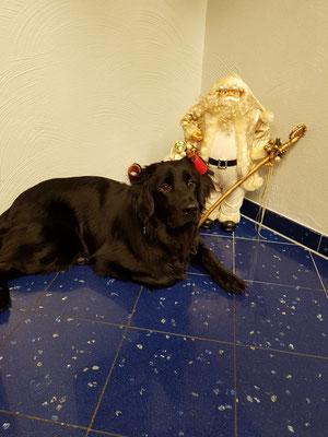 Carlos wartet aufs Christkind
