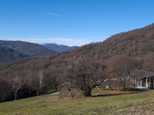 Auf der Alpe Vicania
