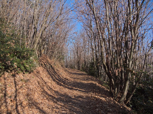 Der Wanderweg nach Baslona verläuft im Kastanienwald