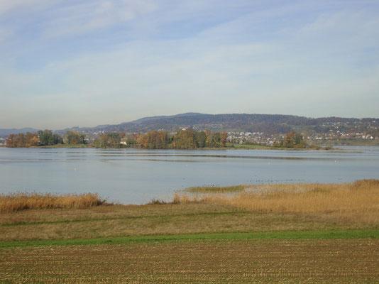 Die Insel Ufenau und das Ufer beim Seedamm. Das Gebiet ist Teil des eines Naturdenkmals von nationaler Bedeutung.