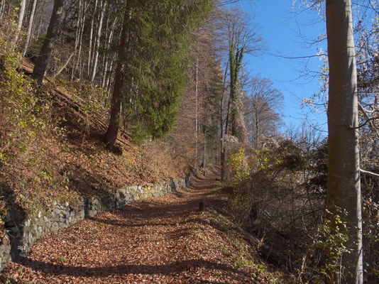 Im Waldreservat Seerenbachwald