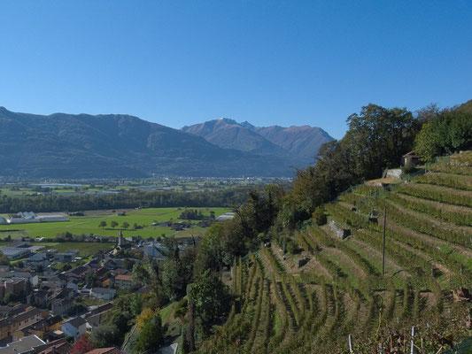 Weinberge oberhalb von Sementina