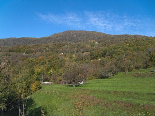 Kastanienwald oberhalb Drossa/Medeglia