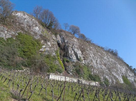 Oberhalb der Weinberge von La Neuveville gibt es eine Felsensteppe