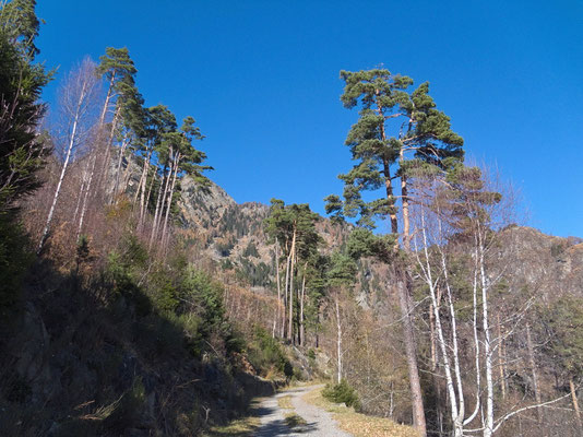 Forststrasse oberhalb Santa Maria i.C.