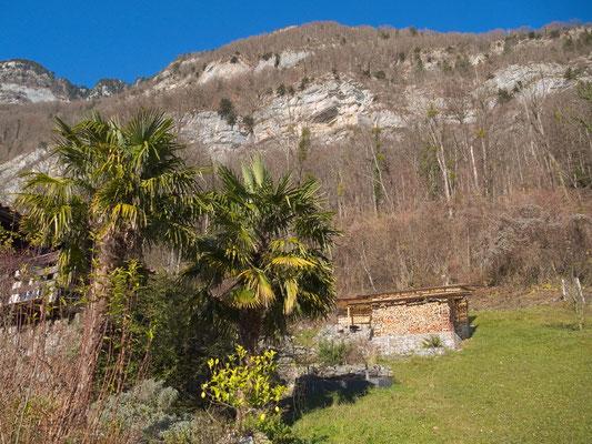 Palmen in Quinten