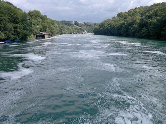 Der Rhein, wieder zahm, unterhalb des Rheinfalls
