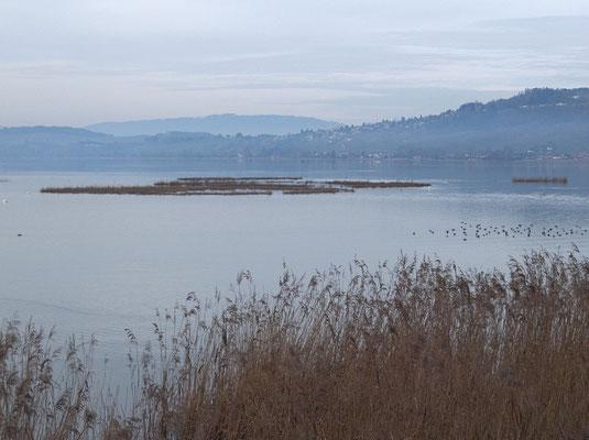 Auf den Flachinseln nisten die Wasservögel